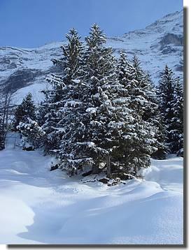 F_Winter wie aus dem Bilderbuch